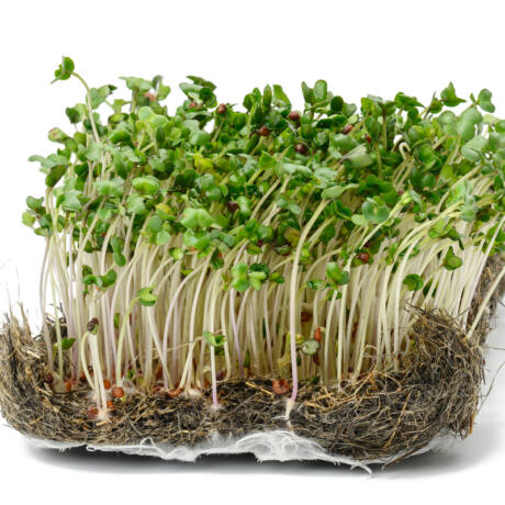Brokkolimag csíráztatásra 15g, bio Bulkshop